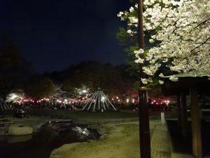 桜フルスロットルin名城公園